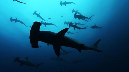 20070320_sharks