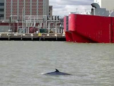 0_61_041807_brooklyn_whale